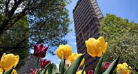 Pittsburgh Springtime – 2010