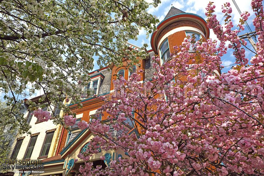 Burgh Blooms